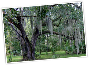 IMPERIAL TREE SERVICE IS DEDICATED TO THE HEALTH OF YOUR TREES.